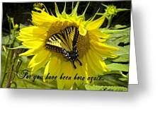 Butterfly Monarch Ba Greeting Card