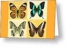 Four Butterfly Montage Greeting Card