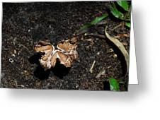 Butterfly Mushroom Greeting Card