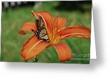 Butterfly On A Blooming Orange Daylily Flower Blossom Greeting Card