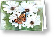 Butterfly On A Daisy Greeting Card