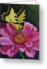 Butterfly On A Pink Daisy Greeting Card