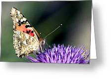 butterfly on a Silybum marianum I Greeting Card