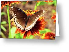 Butterfly On A Sunset Greeting Card
