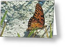 Butterfly On Beach Greeting Card