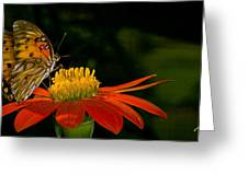 Butterfly On Blossom Greeting Card