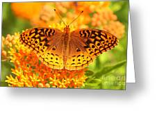 Butterfly On Butterfly Weed Greeting Card