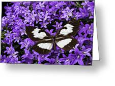 Butterfly On Campanula Get Mee Greeting Card