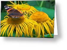 Butterfly On Chrysanthemum Flowers Greeting Card
