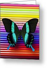 Butterfly On Colored Pencils Greeting Card