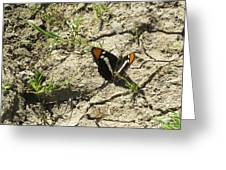 Butterfly On Cracked Ground Greeting Card