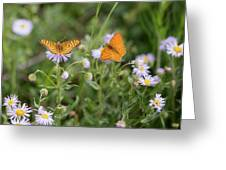 Butterfly On Fleabane #2 Greeting Card