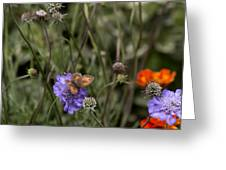 Butterfly On Flower. Greeting Card