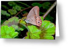 Butterfly On Geranium Leaf Greeting Card