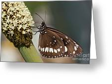 Butterfly On Grass Tree Flowers Greeting Card