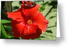 Butterfly On Hibiscus Greeting Card