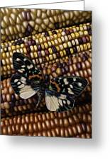 Butterfly On Indian Corn Greeting Card