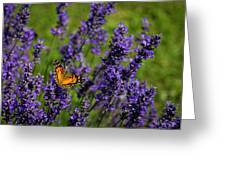 Butterfly On Lavender Greeting Card