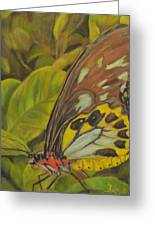 Butterfly On Leaves Greeting Card