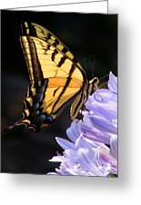 Butterfly On Lilly Greeting Card