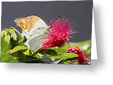 Butterfly On Magenta Flower Greeting Card