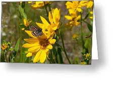 Butterfly On Mule's Ear Greeting Card