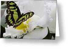 Butterfly On Orchid Greeting Card