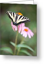 Butterfly On Pink Cone Flower Greeting Card