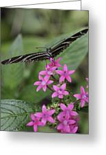 Butterfly On Pink Flowers Greeting Card