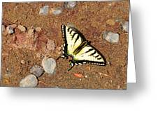 Butterfly On The Beach Greeting Card