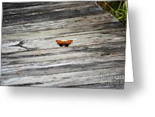 Butterfly On The Dock Greeting Card