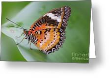 Butterfly On The Edge Of Leaf Greeting Card by John Wadleigh