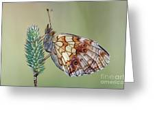 Butterfly On The Grass Greeting Card