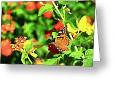Butterfly On The Red Flower 2 Greeting Card