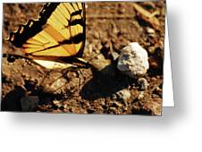 Butterfly On The Rocks Greeting Card