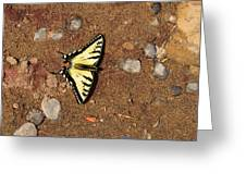 Butterfly On The Sand Two  Greeting Card