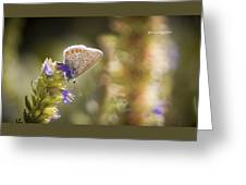 Butterfly On The Spot Greeting Card