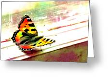 Butterfly On The Window Frame Watercolor Greeting Card