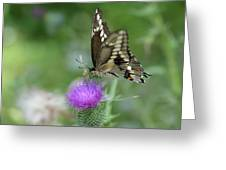 Butterfly On Thistle Flower Greeting Card