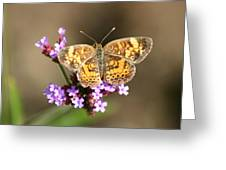 Butterfly On Verbena Greeting Card