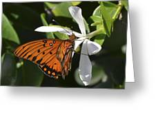 Butterfly On White Greeting Card
