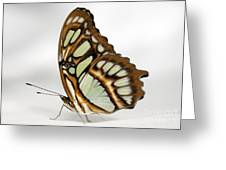 Butterfly On White Satin Greeting Card