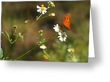 Butterfly On Widflower Greeting Card