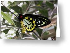 Butterfly One Greeting Card