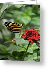 Butterfly Orange And Yellow Greeting Card