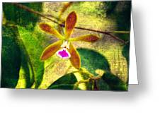 Butterfly Orchid - Encyclia Tampensis Greeting Card