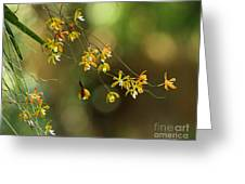 Butterfly Orchid Greeting Card