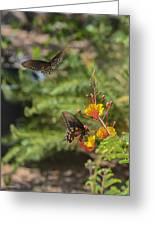 Butterfly Pas De Deux Greeting Card