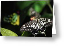Butterfly Perfect Greeting Card