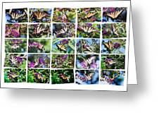 Butterfly Plethora I Greeting Card